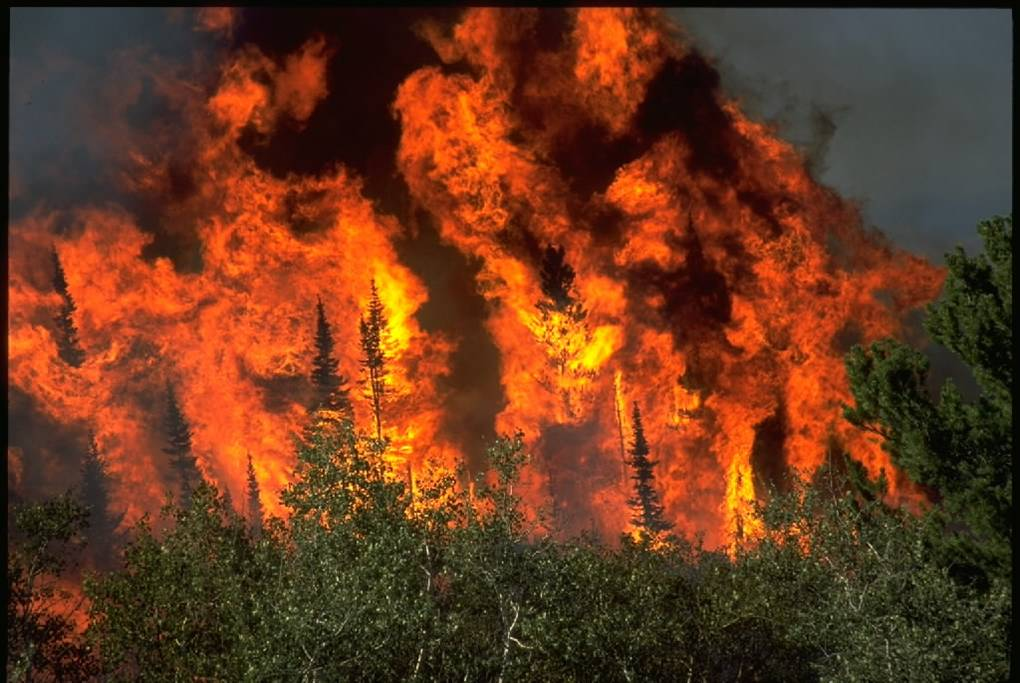 Virtual power plants//Wildfires and climate change