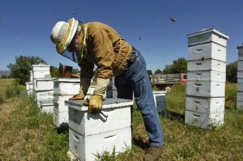 Bees and Pesticides // Radiometers and Weather