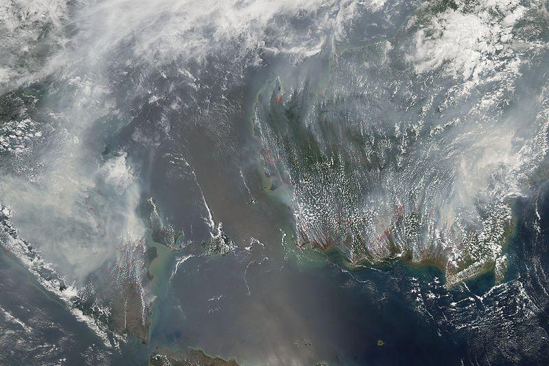 Palm oil and rainforest devastation