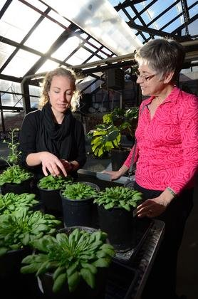 Former undergraduate researcher Elizabeth Lombardi talks with Professor Barbara Demmig-Adams in the greenhouse on the roof of the Ramaley building at the University of Colorado Boulder. (Photo by Casey A. Cass/University of Colorado)