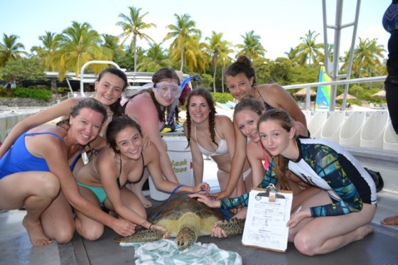 high school students measuring a juvenile green sea turtle off of Virgin Gorda in the British Virgin Islands