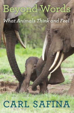 "HANDOUT IMAGE: ""Beyond Words: What Animals Think and Feel"" by Carl Safina (credit: Henry Holt) ***ONE TIME USE ONLY. NOT FOR RESALE"