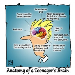 How the Brain Matures