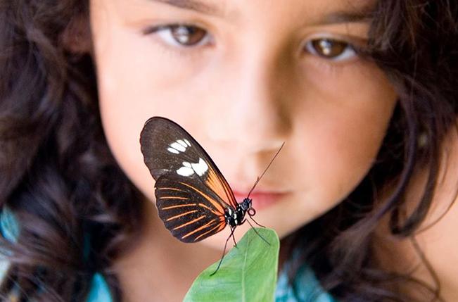 Pollinators Matter // Denver BioLabs