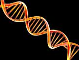Exploring your DNA // Cellular Innards Revealed