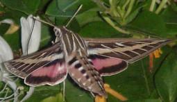 credit: Boulder Audubon Society