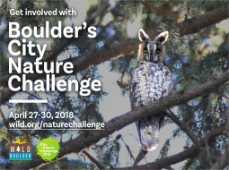 Boulder City Nature Challenge