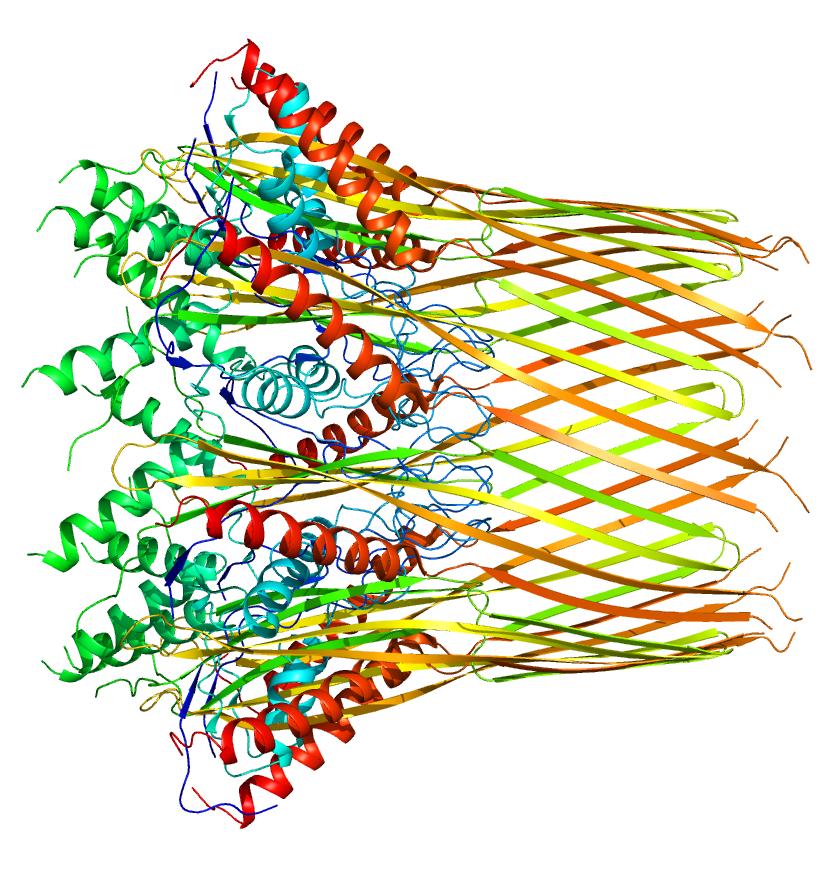 Salmonella Biofilms — Inside of Us